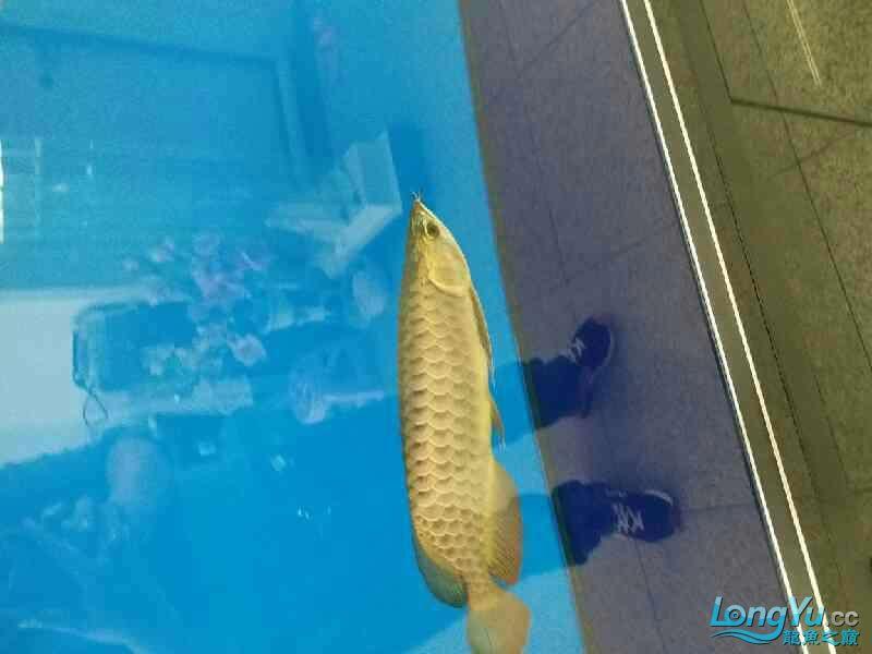 请大家各种吐槽 北京观赏鱼 北京龙鱼第2张