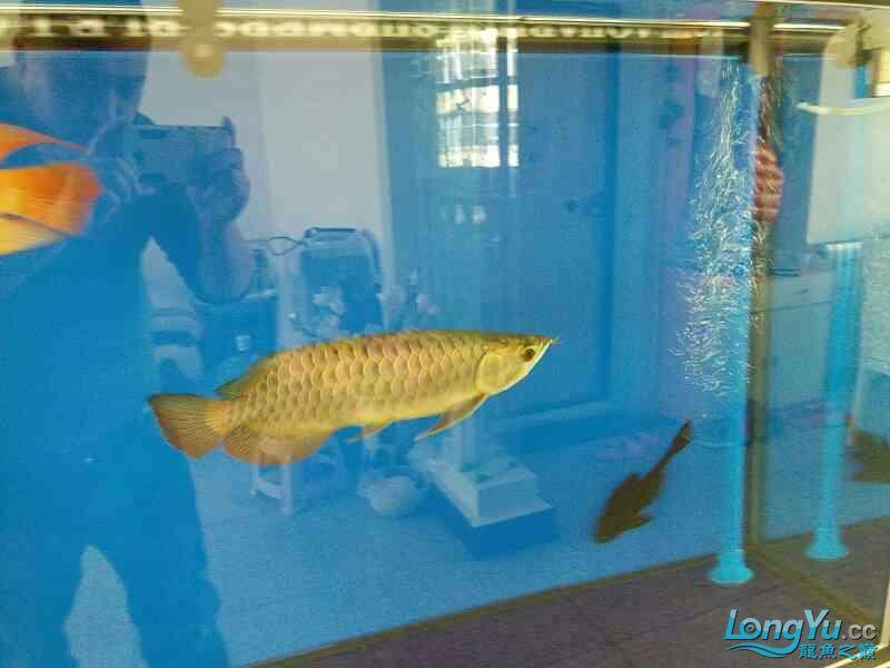 请大家各种吐槽 北京观赏鱼 北京龙鱼第3张