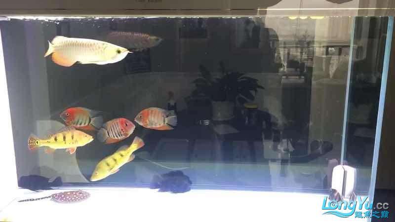菠萝菠萝蜜 北京观赏鱼 北京龙鱼第1张