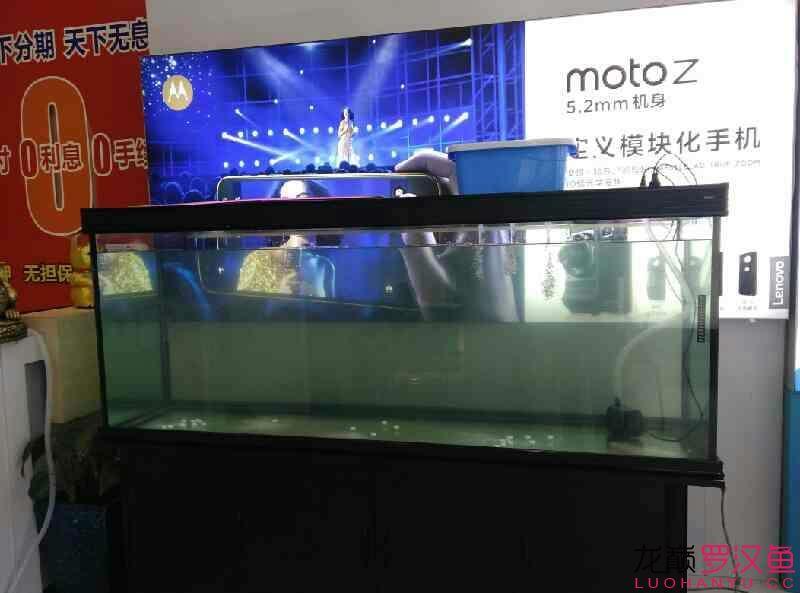 2米缸 北京观赏鱼 北京龙鱼第2张