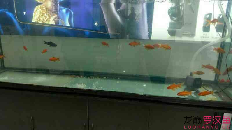 2米缸 北京观赏鱼 北京龙鱼第5张