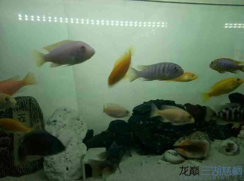 给看看这都是些什么鱼 北京观赏鱼 北京龙鱼第2张