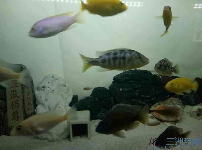 给看看这都是些什么鱼 北京观赏鱼 北京龙鱼第3张