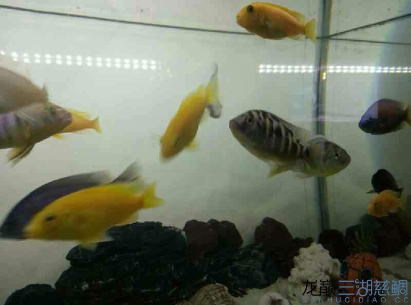 给看看这都是些什么鱼 北京观赏鱼 北京龙鱼第4张