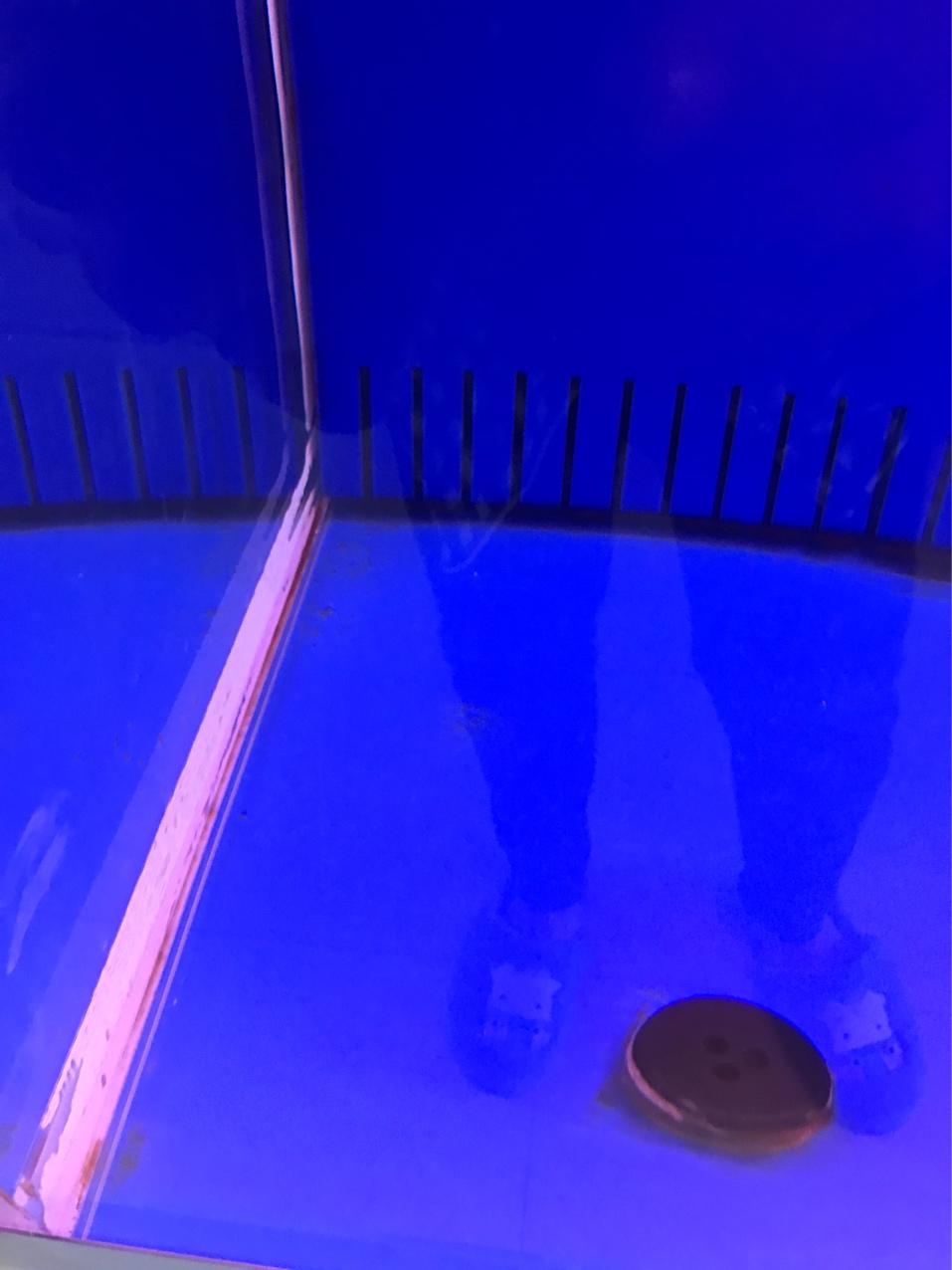 北京黄金大帆鱼各位养冷水鱼的帮帮忙 北京观赏鱼 北京龙鱼第1张