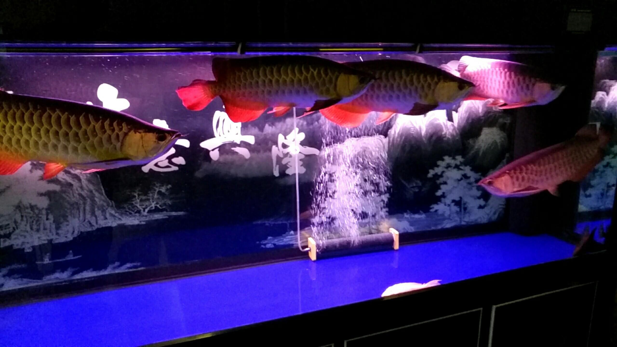 北京观赏水族箱大伙给看看 北京观赏鱼 北京龙鱼第2张