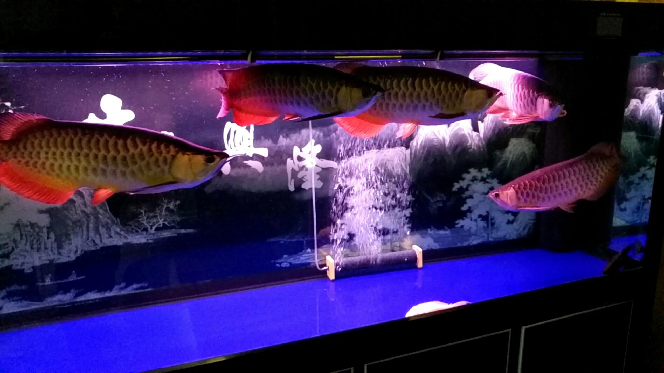 北京观赏水族箱大伙给看看 北京观赏鱼 北京龙鱼第3张