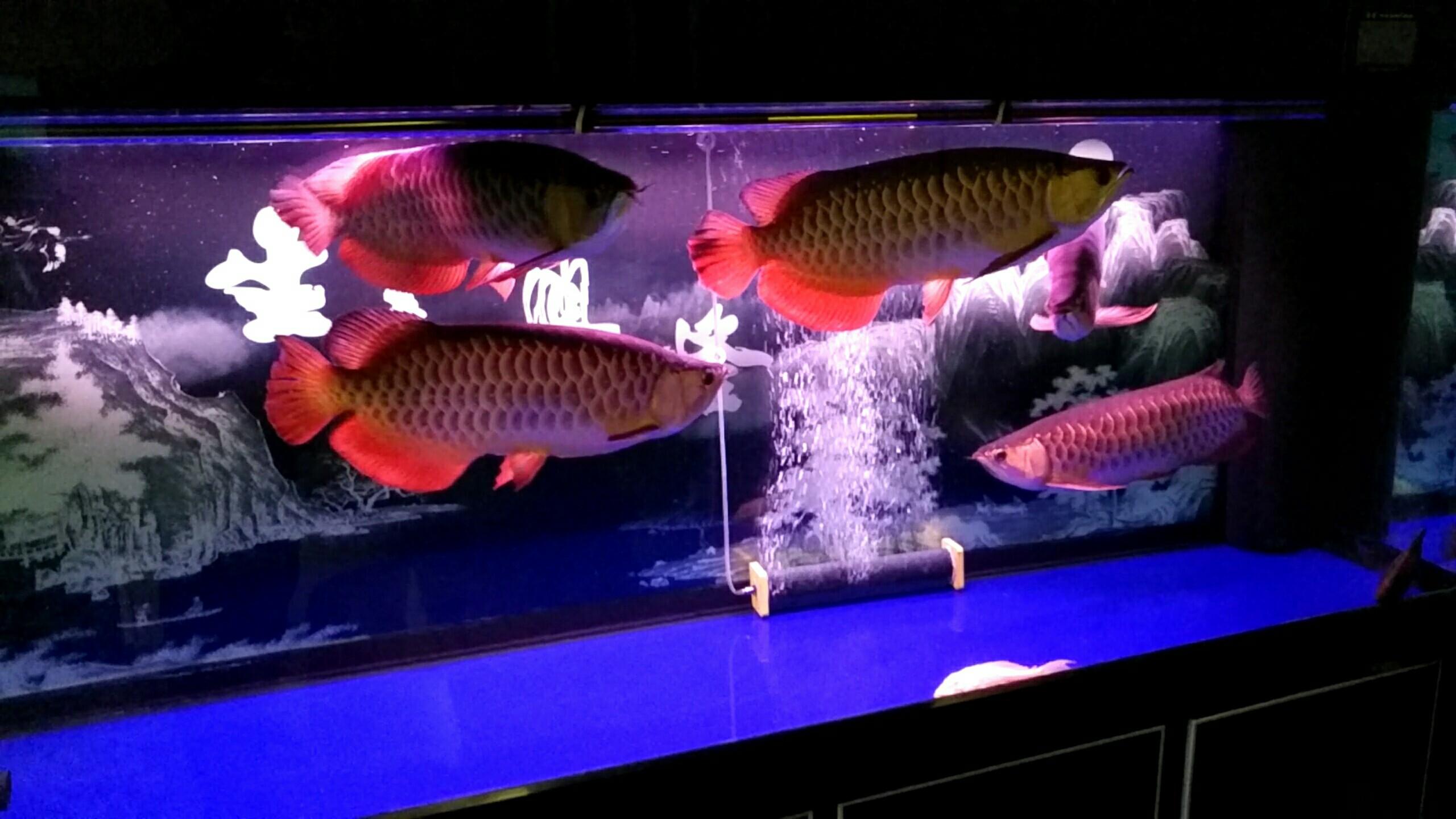 北京观赏水族箱大伙给看看 北京观赏鱼 北京龙鱼第4张