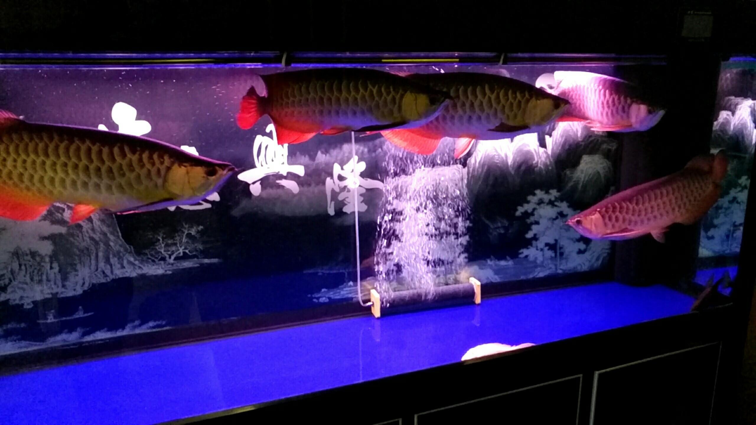 北京观赏水族箱大伙给看看 北京观赏鱼 北京龙鱼第5张