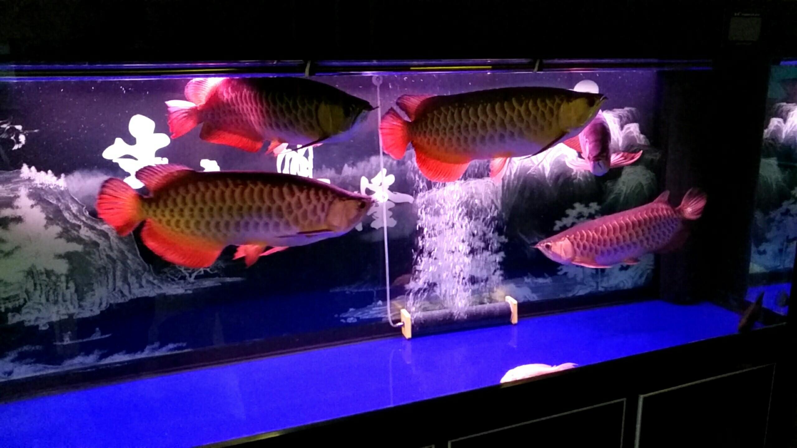 北京观赏水族箱大伙给看看 北京观赏鱼 北京龙鱼第6张