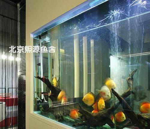 北京哪个水族店卖银龙慈鲷和什么鱼可以一起混养
