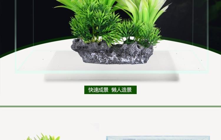 鱼太懒了 北京观赏鱼 北京龙鱼第2张