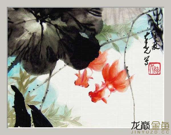 水墨金鱼更显风趣灵动 北京观赏鱼 北京龙鱼第3张