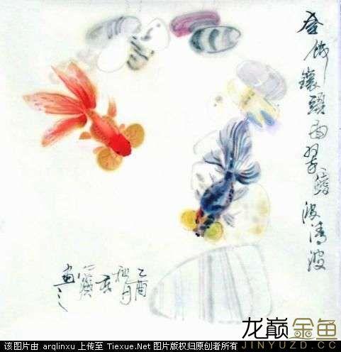 水墨金鱼更显风趣灵动 北京观赏鱼 北京龙鱼第4张
