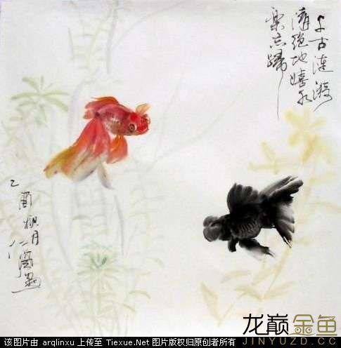 水墨金鱼更显风趣灵动 北京观赏鱼 北京龙鱼第5张