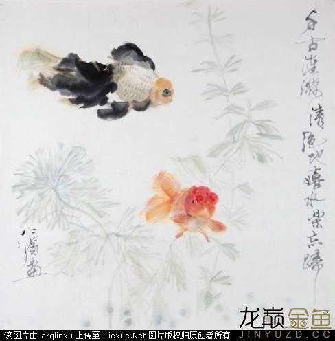 水墨金鱼更显风趣灵动 北京观赏鱼 北京龙鱼第6张