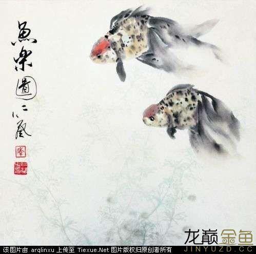 水墨金鱼更显风趣灵动 北京观赏鱼 北京龙鱼第7张