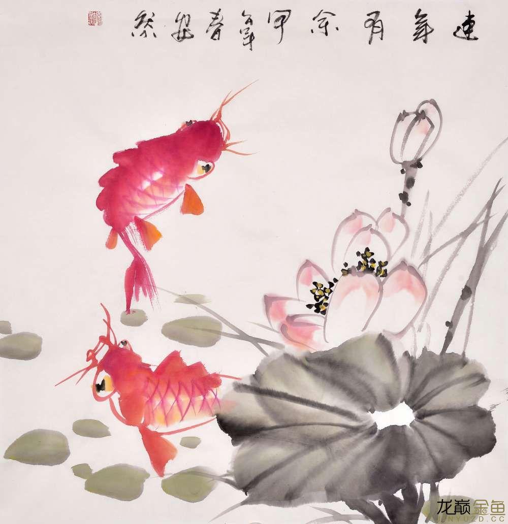 水墨金鱼更显风趣灵动 北京观赏鱼 北京龙鱼第9张