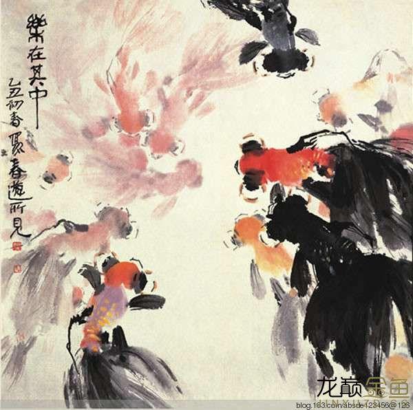 水墨金鱼更显风趣灵动 北京观赏鱼 北京龙鱼第10张