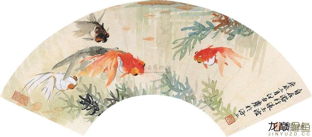 水墨金鱼更显风趣灵动 北京观赏鱼 北京龙鱼第14张