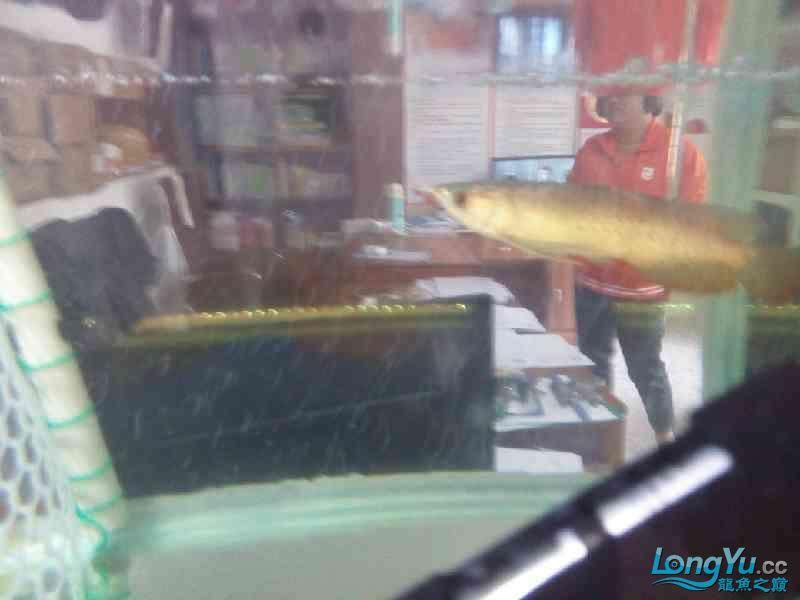 小家伙已慢慢恢复纪录一下 北京观赏鱼 北京龙鱼第4张