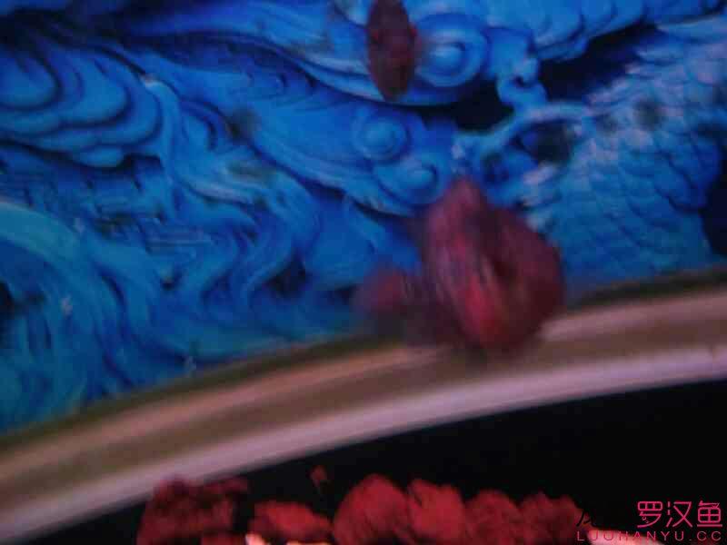 大家给看看啥毛病 北京观赏鱼 北京龙鱼第3张