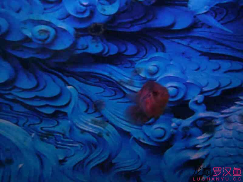 大家给看看啥毛病 北京观赏鱼 北京龙鱼第5张