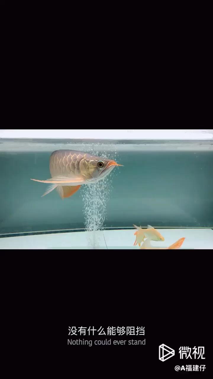 更改白色以查看效果 北京观赏鱼 北京龙鱼第1张