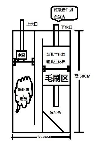 第一稿 北京观赏鱼 北京龙鱼第1张