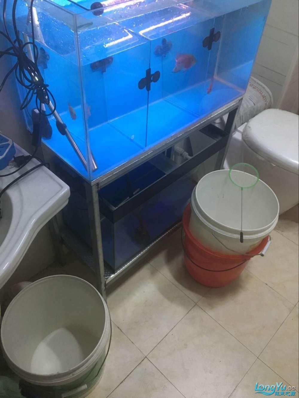 帝王龙鱼会所助你圆梦+个人困水 北京观赏鱼 北京龙鱼第1张