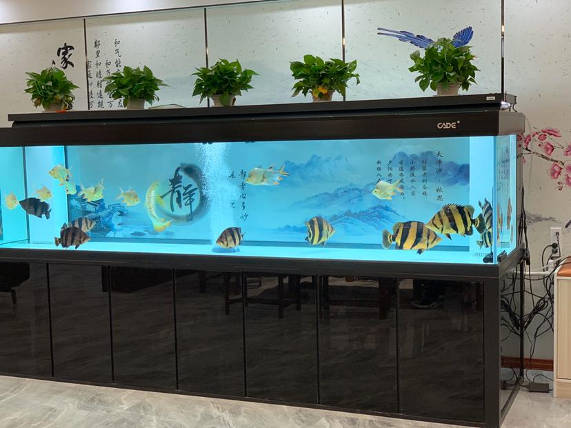 自从我打开油箱已经快一个星期了我期待着恢复 北京观赏鱼 北京龙鱼第1张