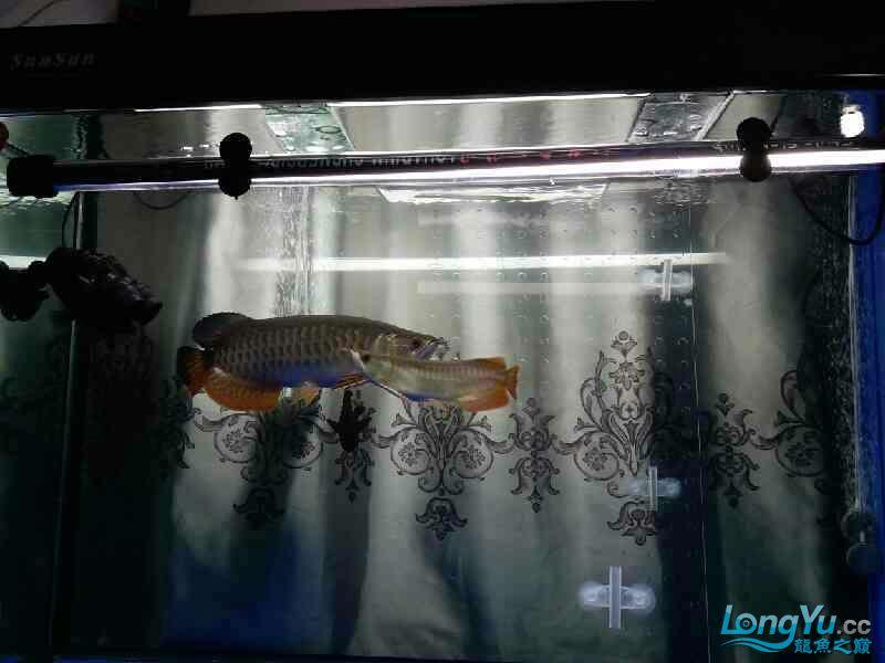 开通玻璃门两市互通 北京龙鱼论坛 北京龙鱼第2张