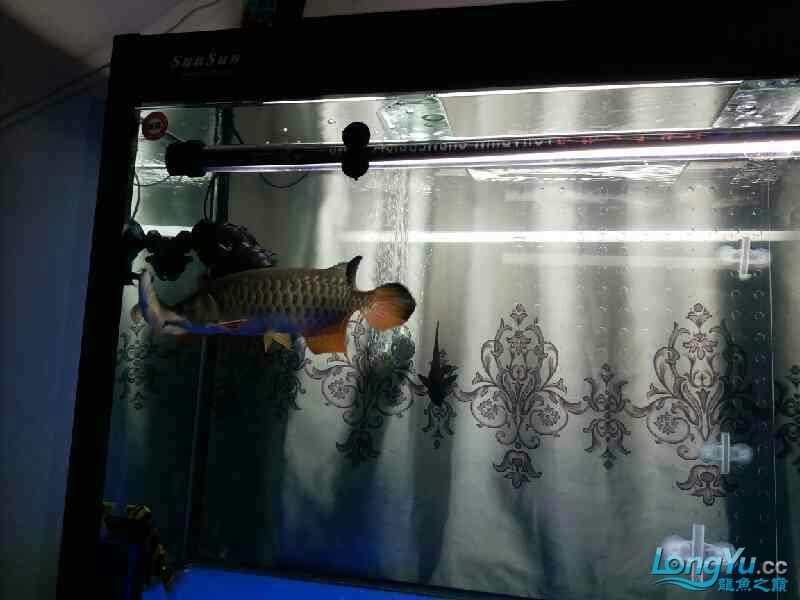 开通玻璃门两市互通 北京龙鱼论坛 北京龙鱼第3张
