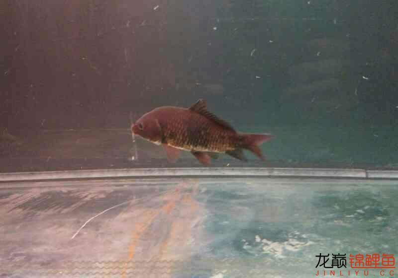北京鱼缸大概多少钱我和我追逐的梦 北京观赏鱼 北京龙鱼第1张