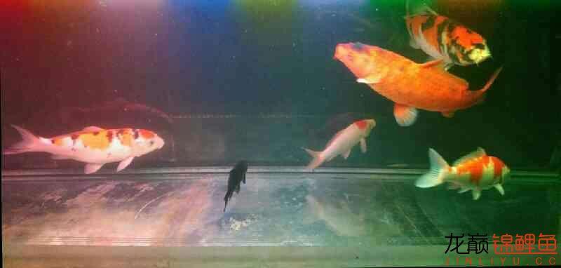 北京鱼缸大概多少钱我和我追逐的梦 北京观赏鱼 北京龙鱼第3张