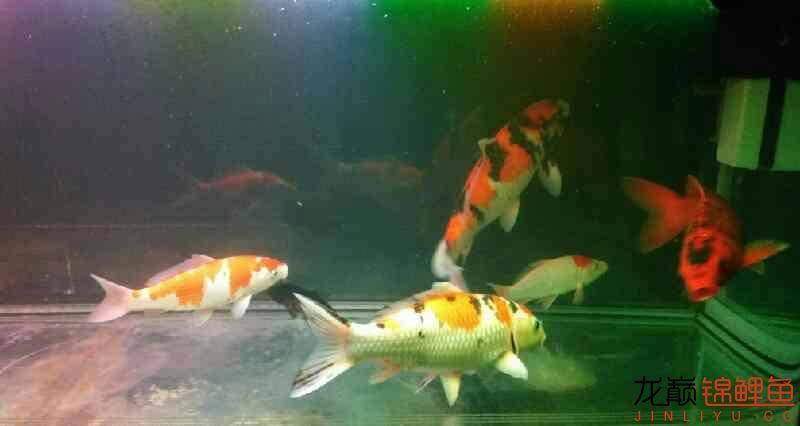 北京鱼缸大概多少钱我和我追逐的梦 北京观赏鱼 北京龙鱼第4张