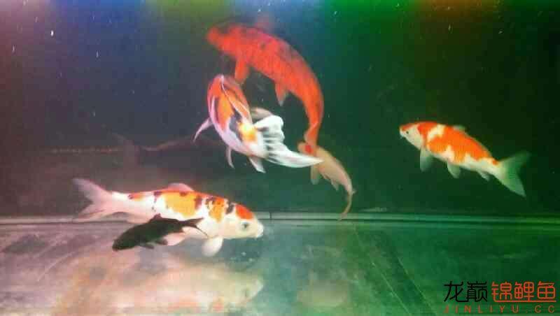 北京鱼缸大概多少钱我和我追逐的梦 北京观赏鱼 北京龙鱼第5张