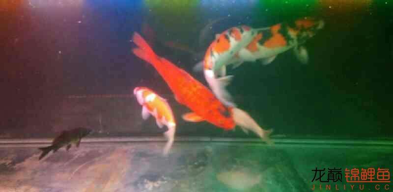 北京鱼缸大概多少钱我和我追逐的梦 北京观赏鱼 北京龙鱼第6张