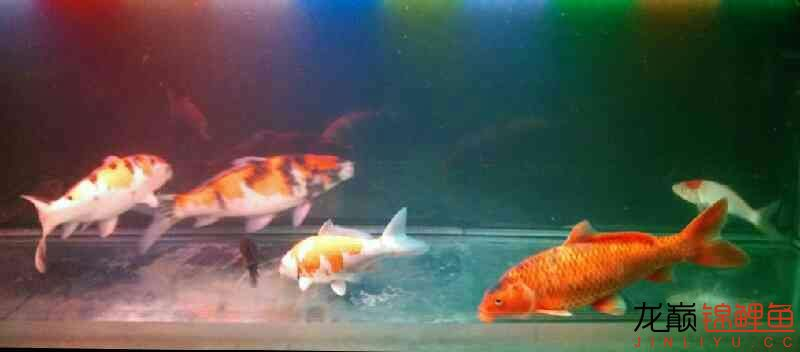 北京鱼缸大概多少钱我和我追逐的梦 北京观赏鱼 北京龙鱼第8张