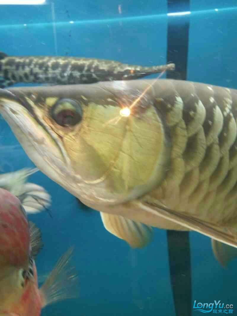 父母让我们看看有什么问题 北京观赏鱼 北京龙鱼第2张