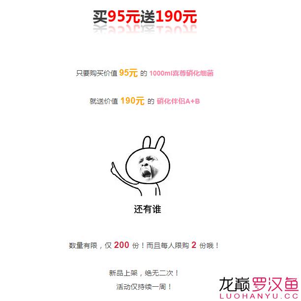 北京哪个水族店卖直纹飞凤买95送190喜尊优惠大放送仅此一次 北京观赏鱼 北京龙鱼第2张