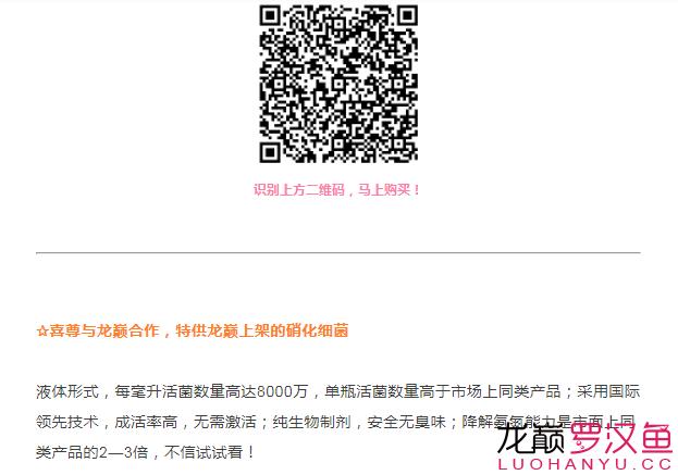 北京哪个水族店卖直纹飞凤买95送190喜尊优惠大放送仅此一次 北京观赏鱼 北京龙鱼第3张