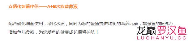 北京哪个水族店卖直纹飞凤买95送190喜尊优惠大放送仅此一次 北京观赏鱼 北京龙鱼第6张