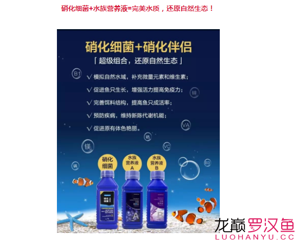 北京哪个水族店卖直纹飞凤买95送190喜尊优惠大放送仅此一次 北京观赏鱼 北京龙鱼第9张