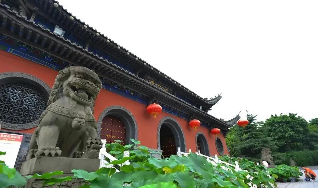 北京祥龙水族馆祝大家端午安康 北京水族馆信息 北京龙鱼第5张