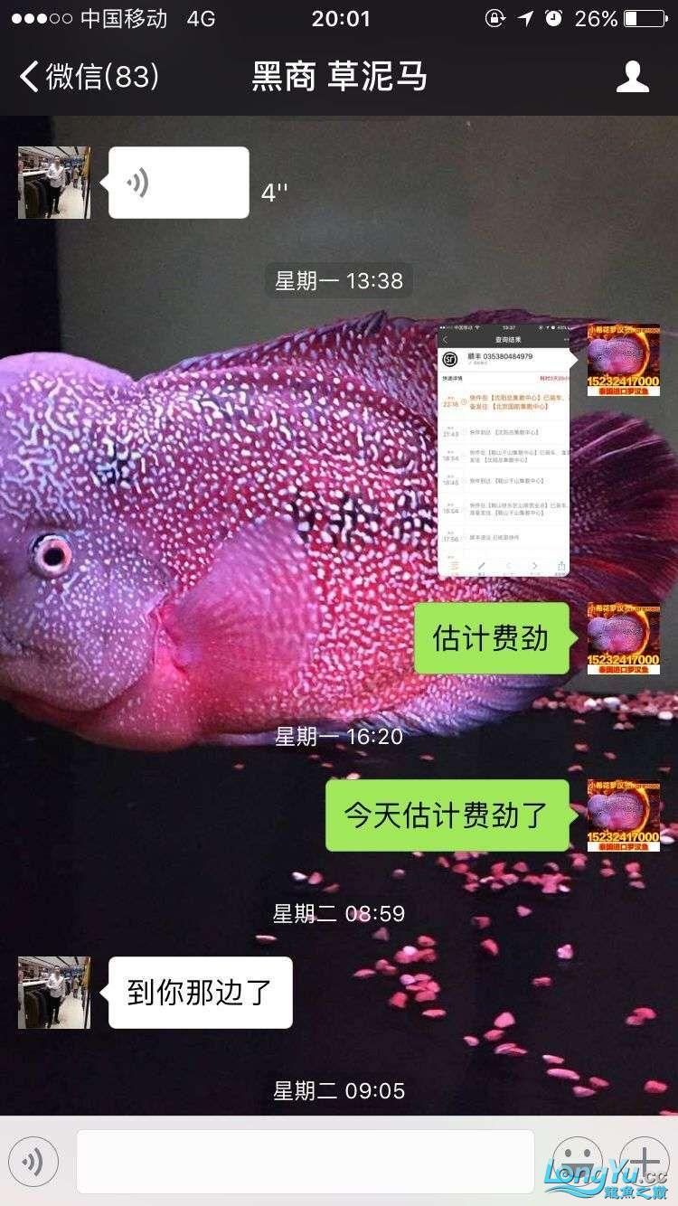 举报一个鞍山骗子 北京龙鱼论坛 北京龙鱼第6张