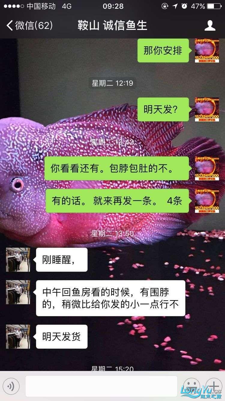 举报一个鞍山骗子 北京龙鱼论坛 北京龙鱼第13张