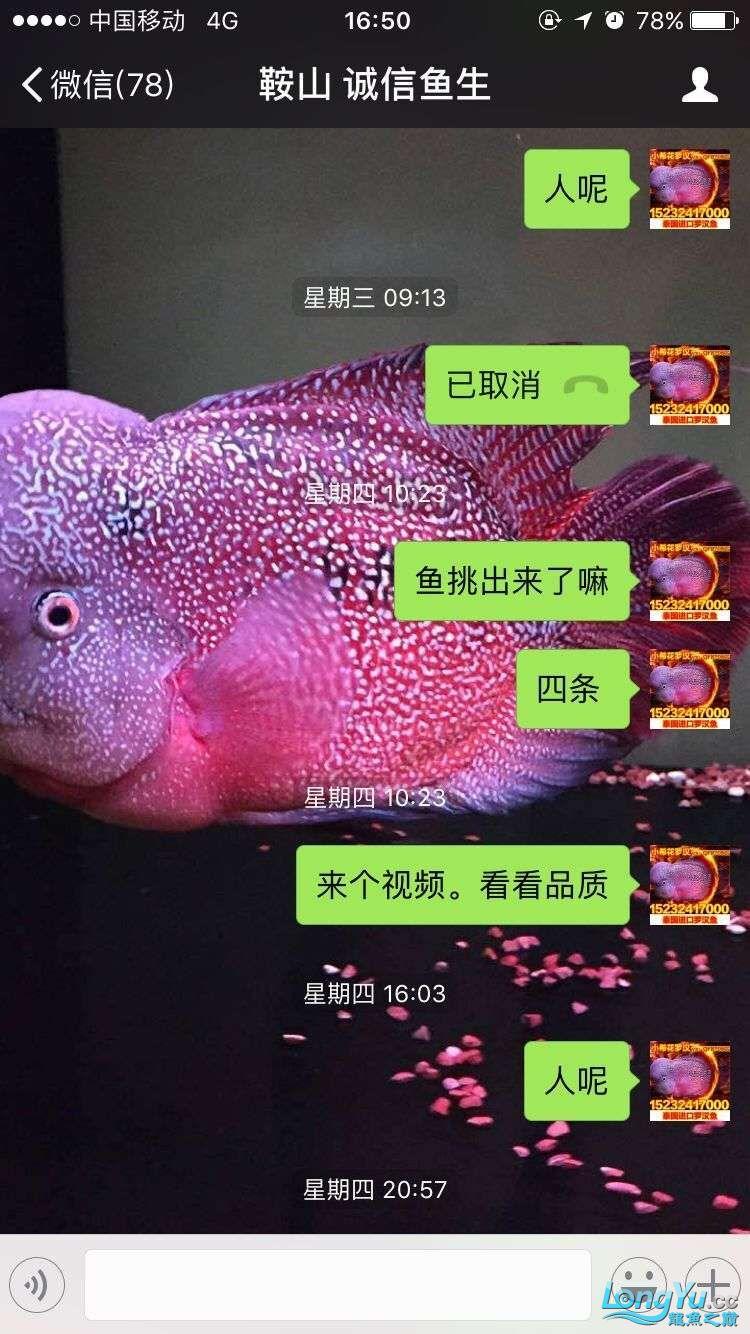 举报一个鞍山骗子 北京龙鱼论坛 北京龙鱼第14张