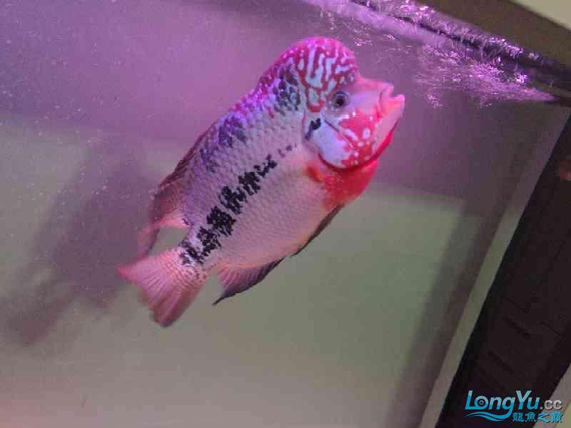 养大到20多厘米了还是不知道啥品种 北京龙鱼论坛 北京龙鱼第5张