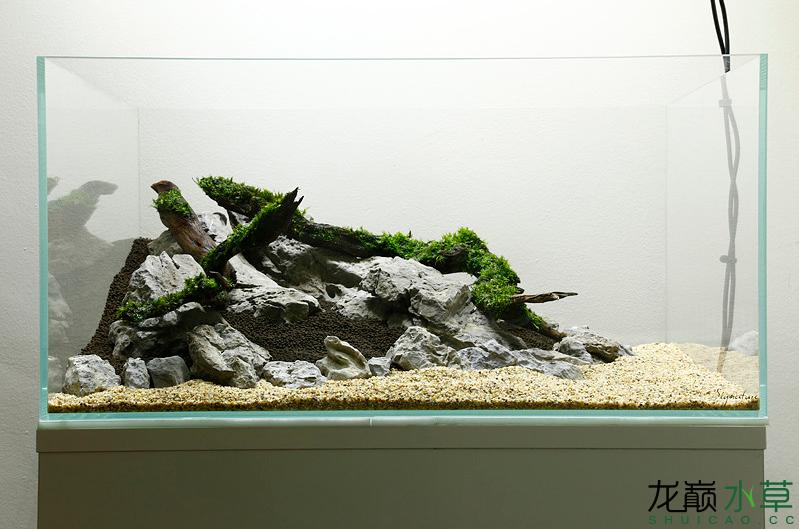 青龙石沉木满满的小清新 北京观赏鱼 北京龙鱼第1张